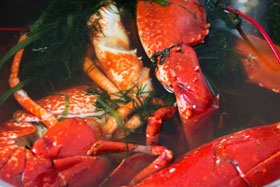 Lobsters in a dill and brine mixture