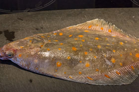Whole plaice with bright orange spots