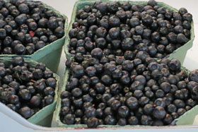 Boxes of bilberries on a market in Sweden